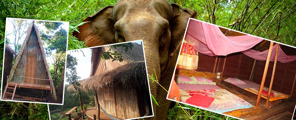 Tree Lodge Cambodia - Mondulkiri Travel Information